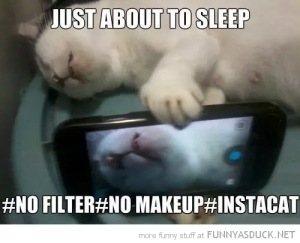 funny-cat-selfie-sleeping-instagram-pics